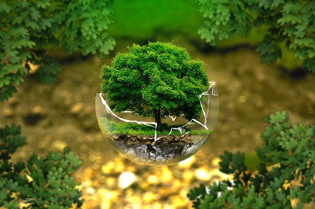 ekologie.jpg